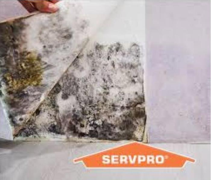 mold spores on a white wall with servpro logo in the bottom right corner